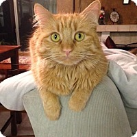 Adopt A Pet :: Bella - Burbank, CA