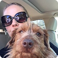 Adopt A Pet :: Johnny Castle - Brooklyn, NY