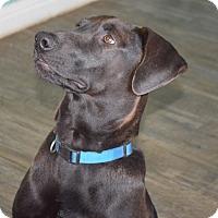 Adopt A Pet :: Batman - CRANSTON, RI