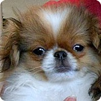 Adopt A Pet :: DALE  - ADOPTION PENDING - Little Rock, AR