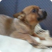 Adopt A Pet :: Franny ADOPTED!! - Antioch, IL