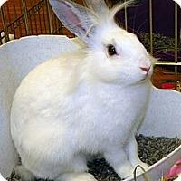 Adopt A Pet :: Tonya - North Gower, ON