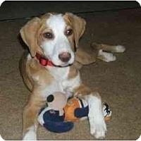 Adopt A Pet :: STAR - Essex Junction, VT