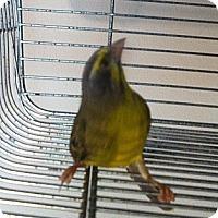 Adopt A Pet :: Zoe - Lenexa, KS