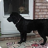 Adopt A Pet :: Josie - Hamilton, ON