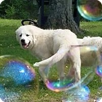 Adopt A Pet :: Elsa ADOPTION PENDING - Bloomington, IL
