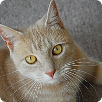 Adopt A Pet :: Simon - Winchendon, MA