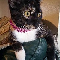 Adopt A Pet :: Lilly - Houston, TX