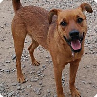 Adopt A Pet :: Ilo  (Max) - PAWS - Las Cruces, NM