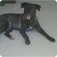 Adopt A Pet :: RANGER - Gilbert, AZ