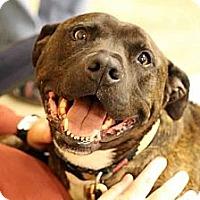 Adopt A Pet :: Buster - Alpharetta, GA