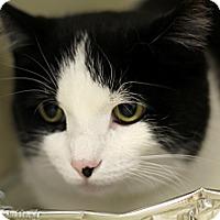 Adopt A Pet :: Betizu - Chicago, IL
