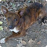 Adopt A Pet :: Nala - Sacramento, CA
