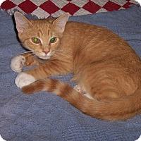 Adopt A Pet :: Joey - Richmond, VA