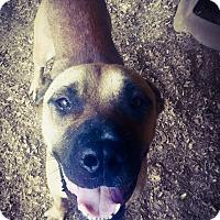 Adopt A Pet :: Rosco (2) - Fort Valley, GA