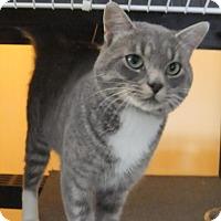 Adopt A Pet :: Clancy - Edmonton, AB
