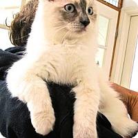 Adopt A Pet :: Flower Child - Davis, CA