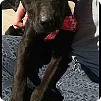 Adopt A Pet :: Jacque - Cranford, NJ