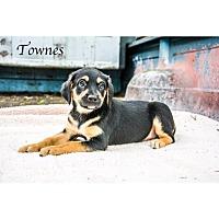 Adopt A Pet :: Townes - West Hartford, CT
