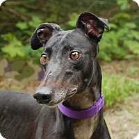 Adopt A Pet :: Ariat - Ware, MA