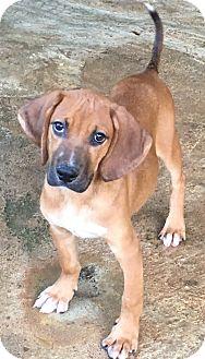 Hound (Unknown Type) Mix Puppy for adoption in Cairo, Georgia - Kason