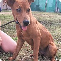 Adopt A Pet :: Annie 💜 ADOPTED! - Saratoga Springs, NY