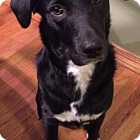 Adopt A Pet :: D Litter-Rosie-ADOPTED - Livonia, MI