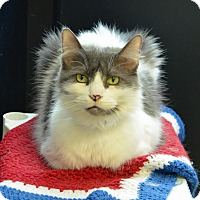 Adopt A Pet :: BISCUIT - Brooksville, FL