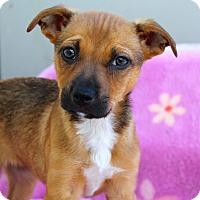 Adopt A Pet :: Dana - Los Angeles, CA