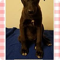 Adopt A Pet :: Winnie meet me 6/2 - Manchester, CT