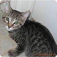 Adopt A Pet :: Ace - Catasauqua, PA