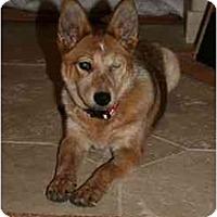 Adopt A Pet :: Sylvia (aka Siv) - Phoenix, AZ