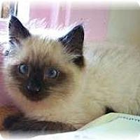 Adopt A Pet :: Mr. Gibbs - Shelton, WA
