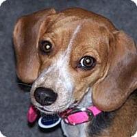 Adopt A Pet :: Lady Bubbles - Phoenix, AZ