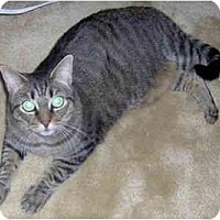 Adopt A Pet :: Trixie - Summerville, SC