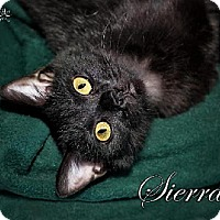 Adopt A Pet :: Sierra 4876F - Fort Mill, SC