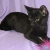 Adopt A Pet :: Dewey - Powell, OH