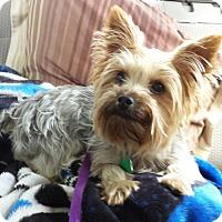 Adopt A Pet :: Knox - Ashland City, TN