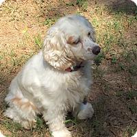 Adopt A Pet :: Karsen - Sugarland, TX