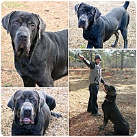 Adopt A Pet :: Blue - Forked River, NJ