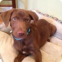 Adopt A Pet :: Mr. Jay - Marlton, NJ