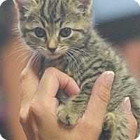 Adopt A Pet :: Somerset - Reston, VA