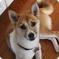 Adopt A Pet :: Momiji - Manassas, VA