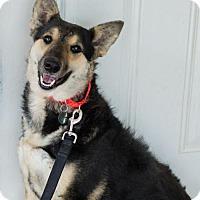 Adopt A Pet :: Ruby - Atlanta, GA