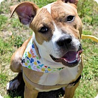 Adopt A Pet :: 1703-0054 Medicine - Virginia Beach, VA