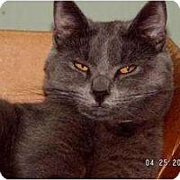 Adopt A Pet :: Blue Bear - Milford, OH