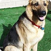 Adopt A Pet :: Mena - Gilbert, AZ