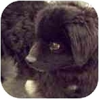 Adopt A Pet :: MAX - Chesapeake, VA
