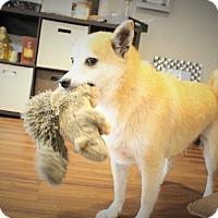 Adopt A Pet :: Naoki - Manassas, VA