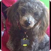 Adopt A Pet :: Bordentown NJ - Marcel - New Jersey, NJ